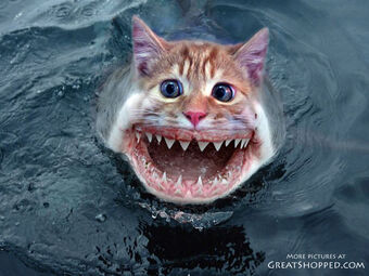 24-catshark_copy.jpg