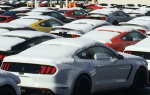 Shelby GT350 Mustangs at Flat Rock